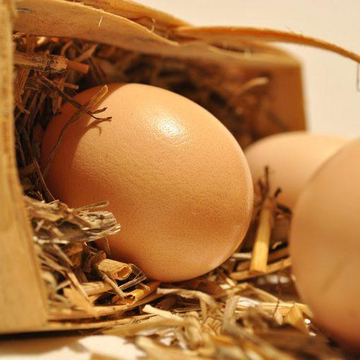 Thatcher Farms eggs